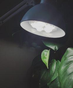 Mein Pflanzenlicht: eine einschaubbare LED-E27-Birne